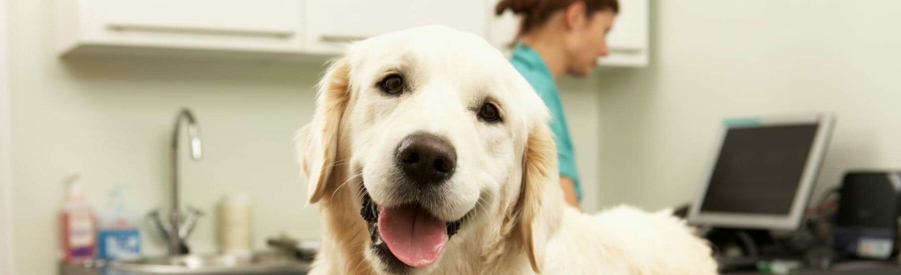 Happy dog in a vet examination room