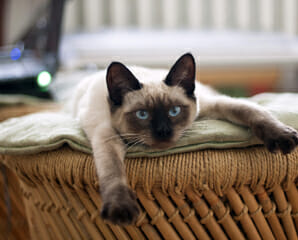 A cat lying on top of a basket