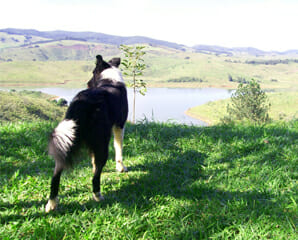 Back view of a dog standing in a field