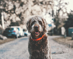 Happy dog sitting in the middle of a road