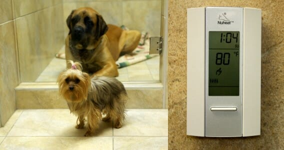 Two dogs by a glass door in the canine ward and a thermostat