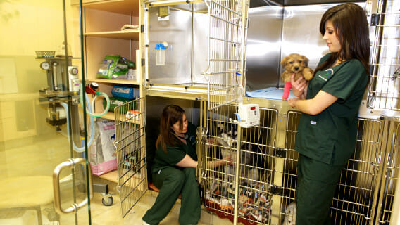 Veterinary staff petting a dog in a cage and holding a puppy