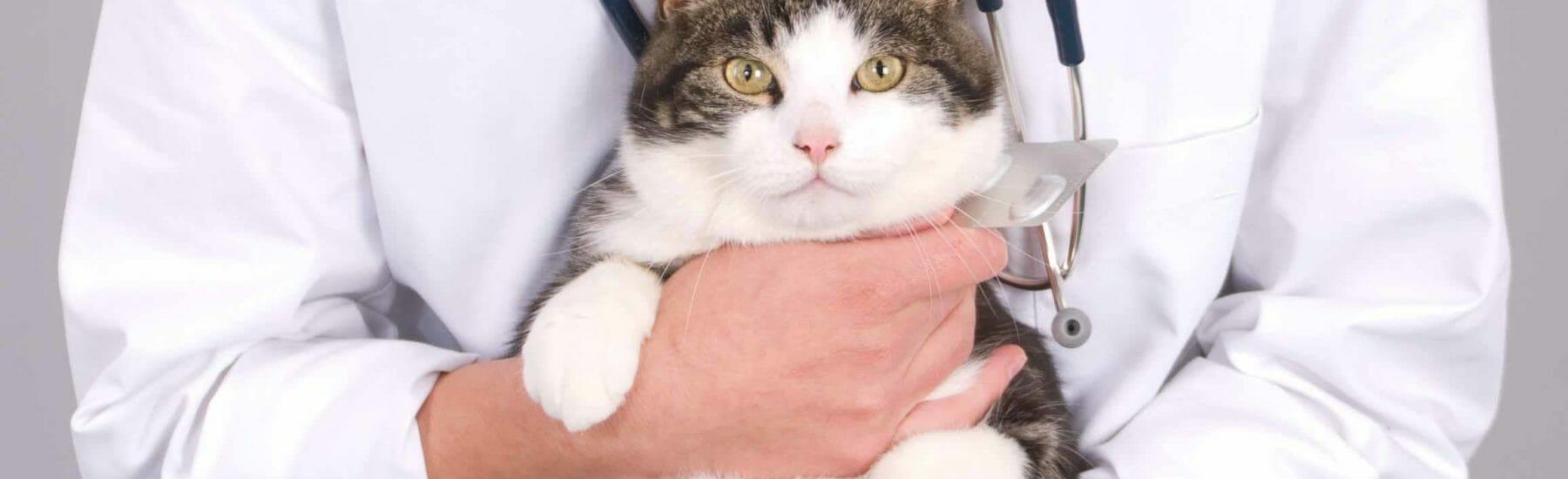Veterinarian holding a cat