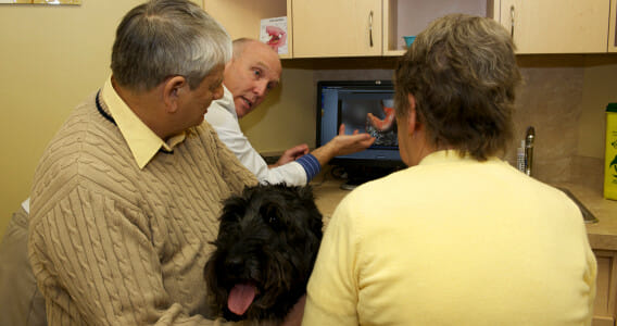 Veterinarian pointing at a computer screen and talking to two dog owners with their dog