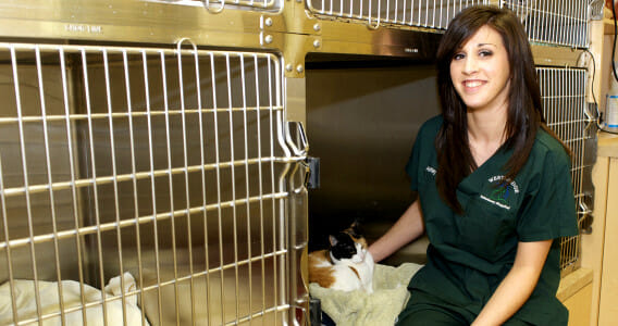 Westbridge veterinary staff member with a cat at the feline ward