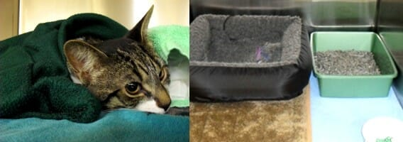 A brown cat lying underneath a blanket, a cat bed and a litter box
