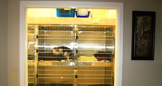 Cat cages in feline ward at westbridge veterinary hospital