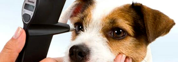 Hand holding an ophthalmoscope and examining the eye of a dog