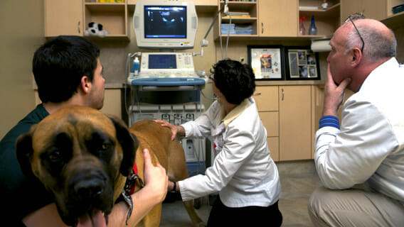 Two veterinary staff members, a dog and the owner crouched down and looking at an imaging machine