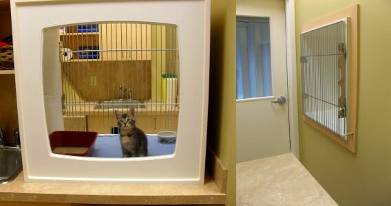 Kitten with litter box and bowl inside the insolation kennel