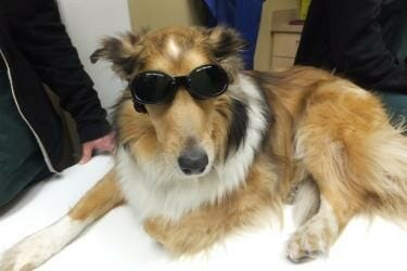 Dog wearing safety goggles