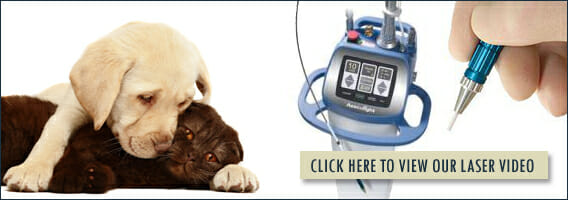 Click here to view our laser video banner