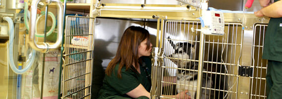 Veterinary staff member inside a cage with a dog