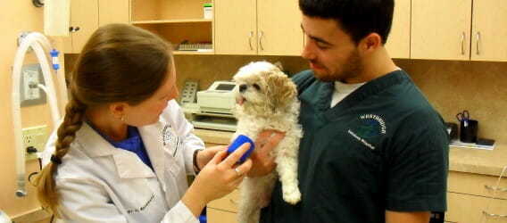 Veterinarian interacting with a dog being held by a vet tech