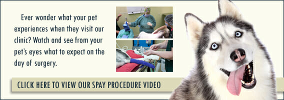 Click here to view our spay procedure video banner
